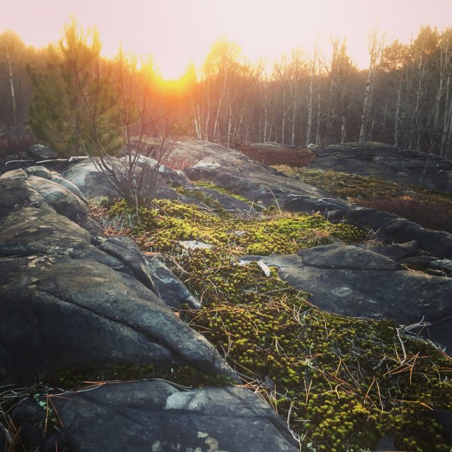 Sunrise on the Canadian Shield 17Nov16 - Dianne Whelan